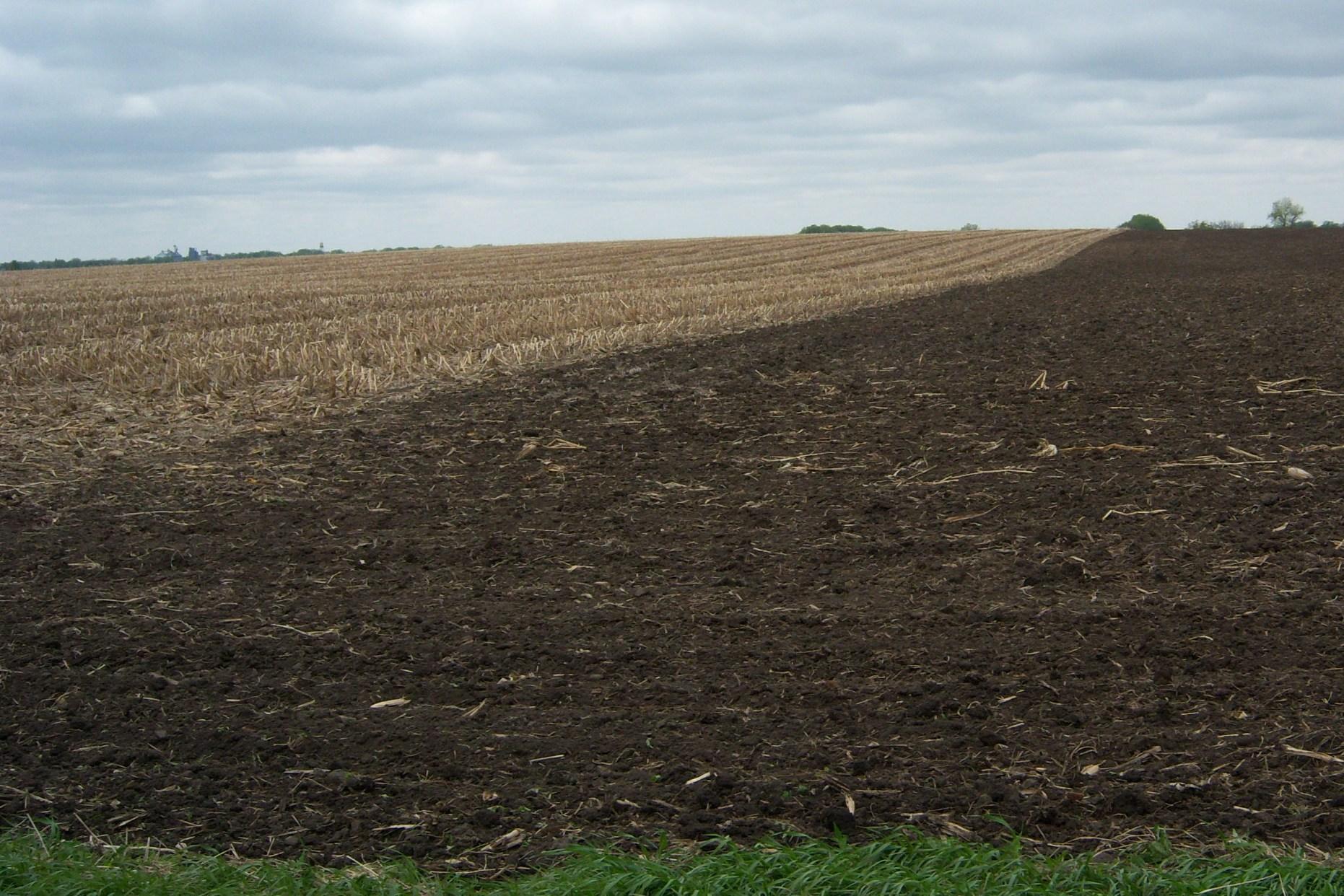 Corn field soybean field
